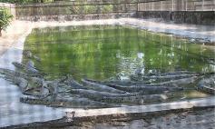 1.1400341773.crocodile-breeding-centre