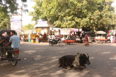 1.1404134744.cow-used-as-a-roundabout---bundi