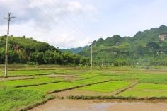 1.1404172800.rice-fields-mai-chau