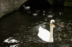 1.1414414089.swan