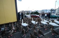 1.1423842840.its-quack-time