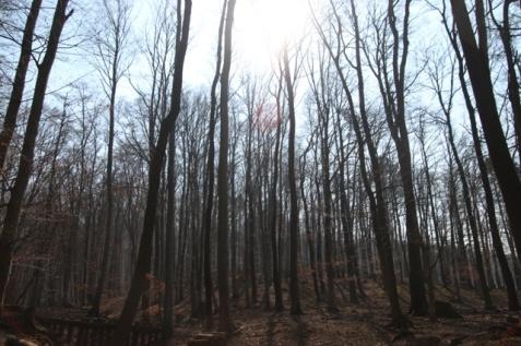 1.1426921544.2-vienna-woods