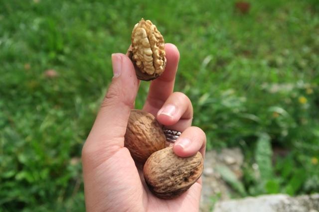 3.1444750096.walnuts