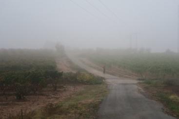 3.1445191072.misty-day