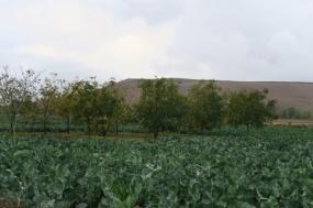 3.1445353679.cauliflower-farm