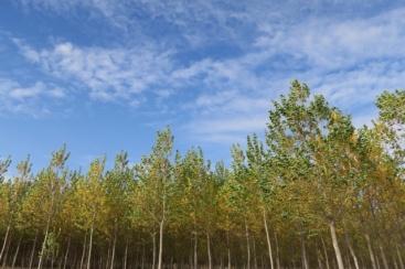 3.1445796660.autumn-trees