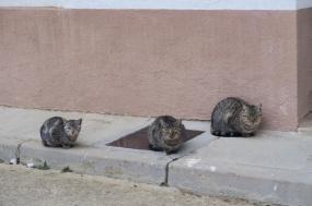 3.1445875876.cats