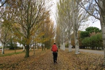 3.1445957497.autumn