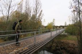 3.1446143398.bridge